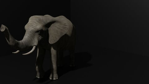 3D Highpoly Realistic Indian Elephant