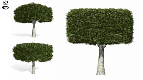 3D Assets: topiary tree 5s