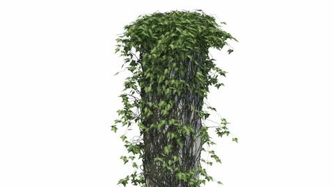 Ivy on a column V1