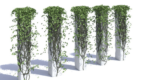 Ivy on a column V3