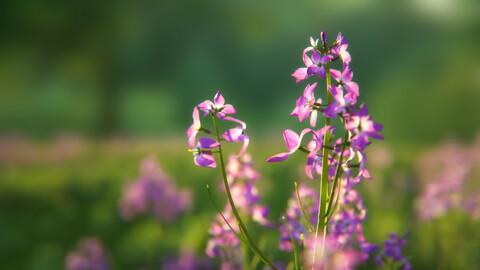 Violet Flower | VFX Grace