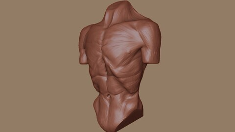 Zombie body anatomy