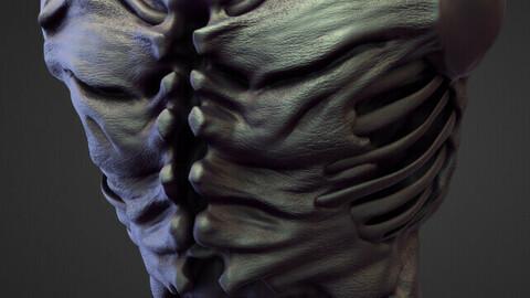 TORSO5 high poly sculpt