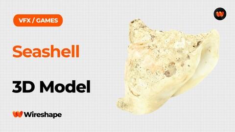 Seashell Raw Scanned 3D Model