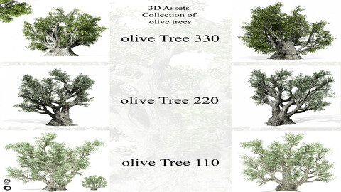 3D Assets: Collection of olive Trees