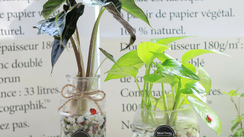 SKINDAPSUS Glass Fishbowl Bowl Hydroponics Plant