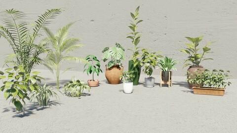 Plants Collection 10+ 3D Models