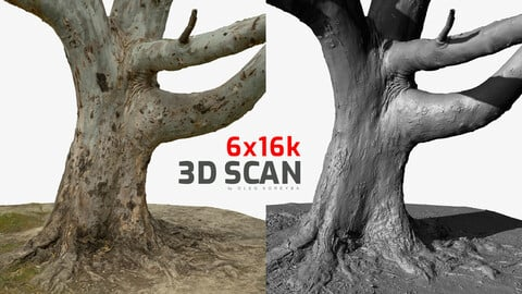 Tree Scan Ultra HQ mesh 6x16k Textures