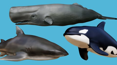 Sperm whale , Killer whale &  Shark Low-poly 3D models
