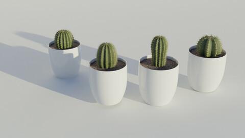 Succulent + cactus in pot asset