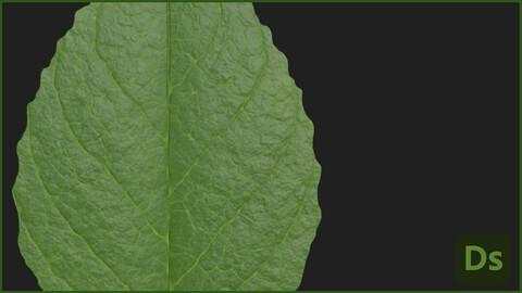 Blueberry Leaf Substance Material