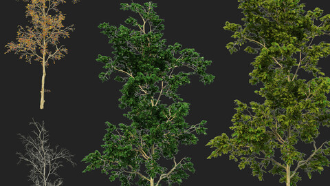 four seasons trees 01