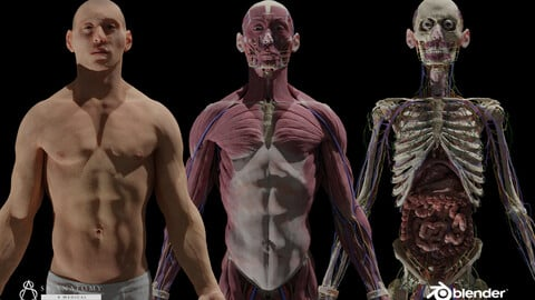 HD Male Complete Human 3D Anatomy Model PBR