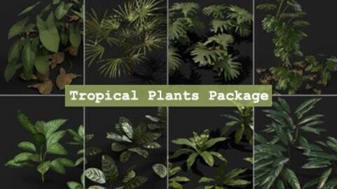 Tropical Plants Package Vol. 2