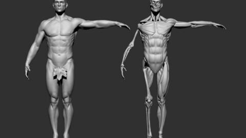 Anatomy 2021 3D model
