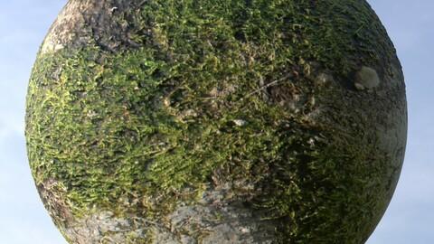 Grass And Asphalt 1 PBR Material