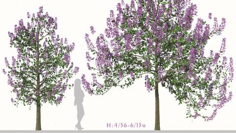 Set of Paulownia Tomentosa Tree (Princess tree) (2 Trees) ( 3Ds MAX - Blender - Cinema4D - FBX - OBJ )