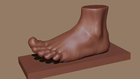 Female Foot Anatomy