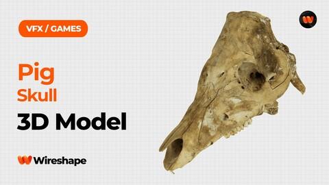 Pig Skull Raw Scanned 3D Model