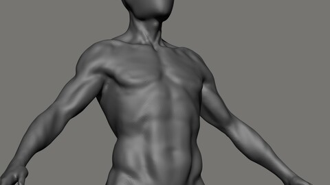 Male Anatomy Base (Endomorph)