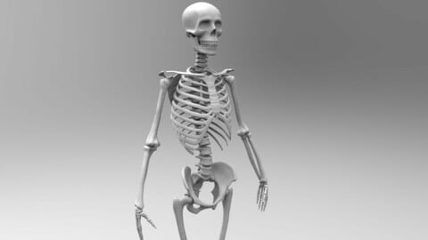 Rigged low poly and high poly Skeleton