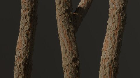 Coniferous Tree Bark - Vol.2