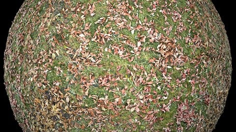 Scanned PBR autumn fallen leaves and grass 4k metal roughness