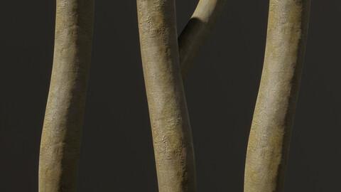 Young Ash Tree Bark