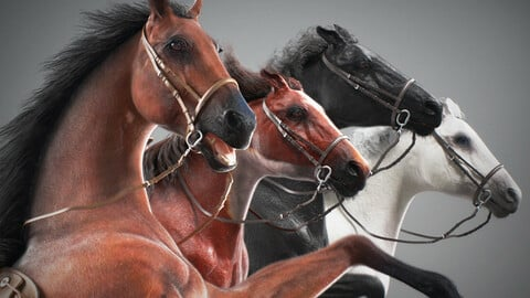 Animated Horses v4