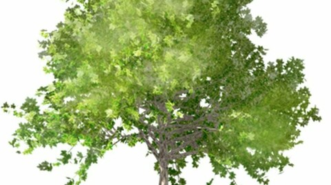 Resource-Plant  Plane-tree 4