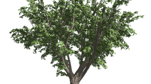 Resource-Plant Elderberry of Canada