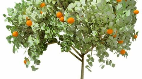 Resource-Plant Orange 1