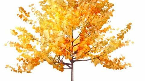 Resoure-Plant Generic Tree Autumn