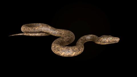snake python lowpoly 3d model pbr 4k texture