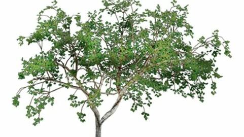 Resource-Plant Almond