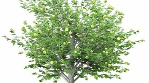 Resource-Plant Apple tree