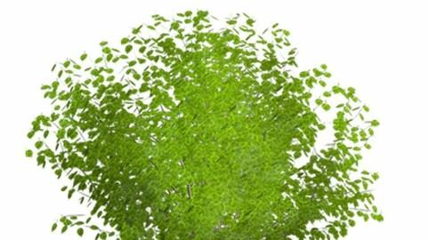 Resource-Plant Apricot