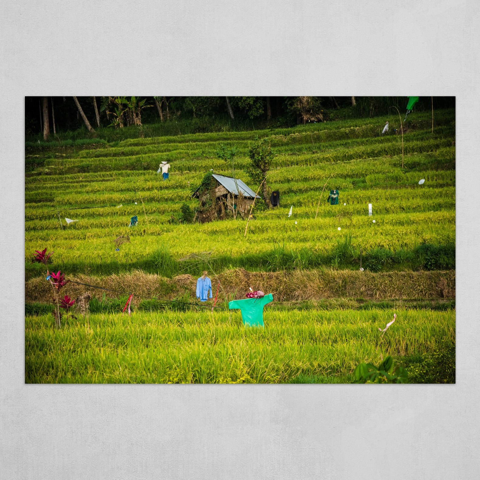 Scarecrows in the rice fields