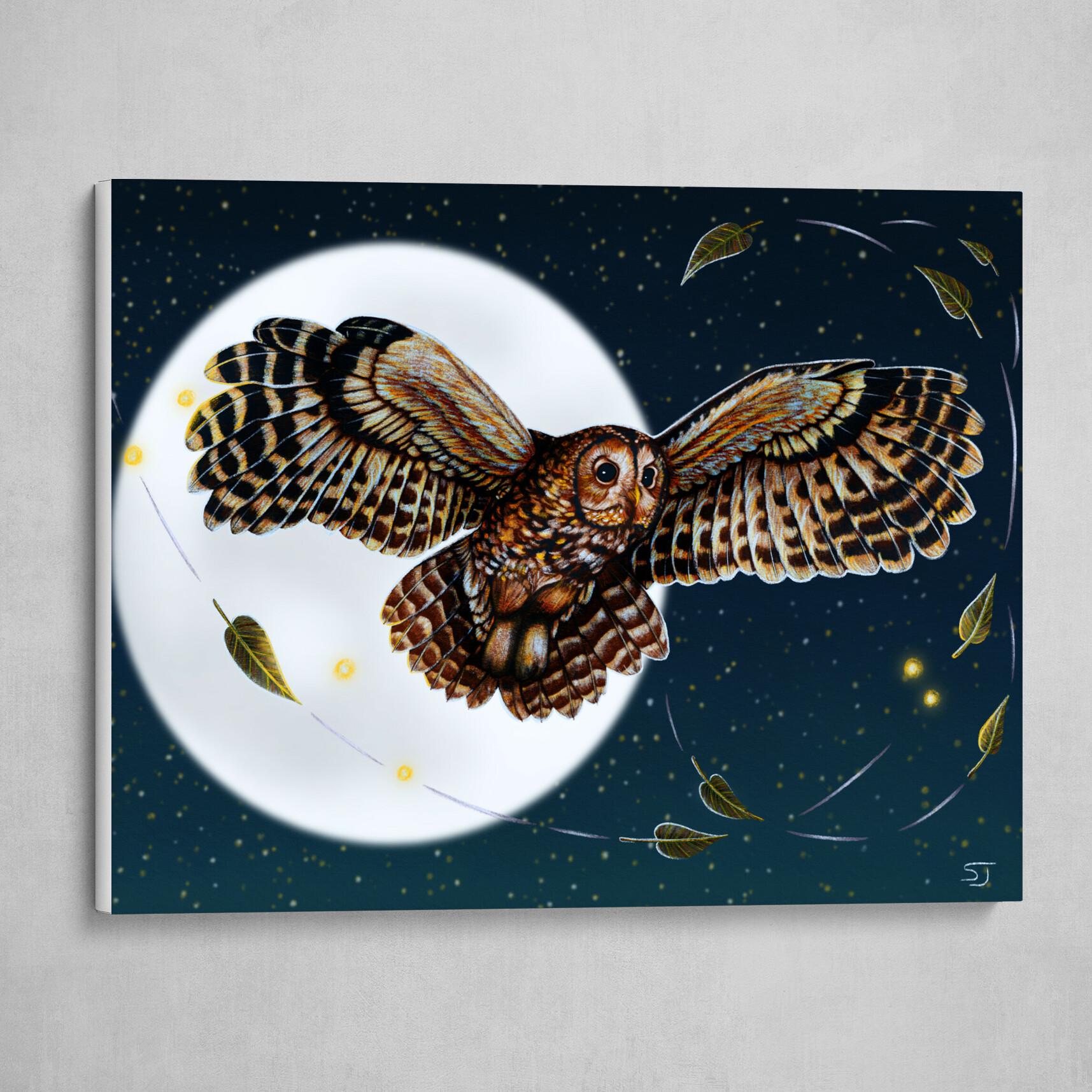 Tawny Owl in the Night Sky