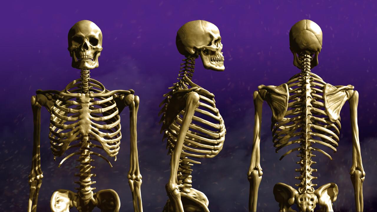 Skeleton 001
