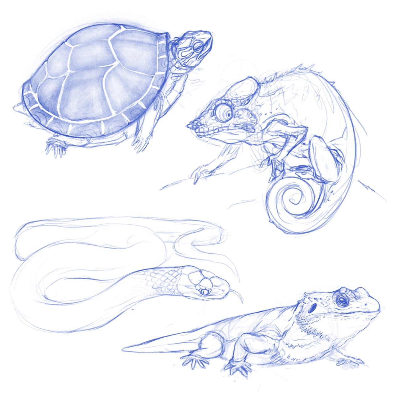 Whitlatch b   reptiles sketches