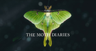Moth diaries intro.mov snapshot 00.51  2018.03.06 11.09.27