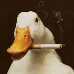 Ducky Duckling